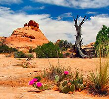 Escalante by twokonings