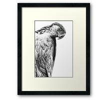 The Philippine Eagle Framed Print