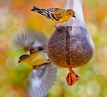 Finch Fly By by Ann J. Sagel