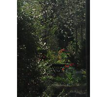 Red and green Photographic Print