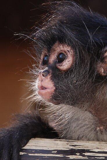 Young Spider Monkey by Alexa Pereira