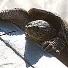 Swimming Pool Turtle Closeup by susan stone