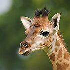 Inquisitive Baby by Alexa Pereira