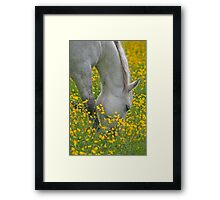 Golden Grazing Framed Print