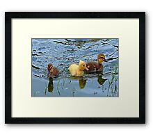 The Three Amigos  Framed Print