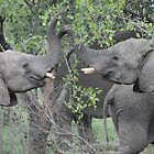 Elephants Playing on Safari by Rod Hawk