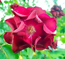 My Precious Flower by Michael Degenhardt