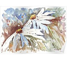 Daisy love in Spring Poster