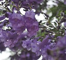 Jacaranda Patterns on a Rainy Day by Lozzar Flowers & Art