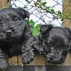 double cute by dinghysailor1