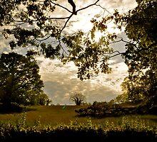 Rockefeller State Park, Sleepy Hollow, NY by Nancy Rohrig