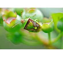 Beetle on the blueberries Photographic Print