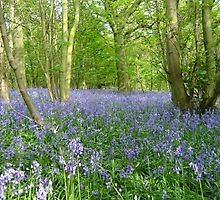 Bluebell carpet by Simon Brown