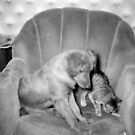 Maxi with a kitten as girlfriend by Heidi Mooney-Hill