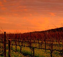 Vineyard Sunset, Winter, Alexander Valley, N. CA. by Ascender Photography