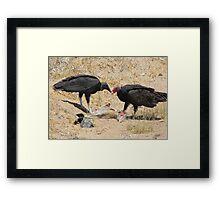New World Vultures ~ Turkey & Black Vulture Framed Print