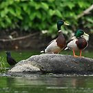 Three's a Crowd! by Lori Deiter