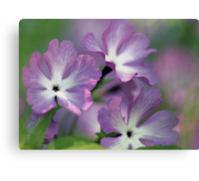 Primrose - Morning Light Canvas Print
