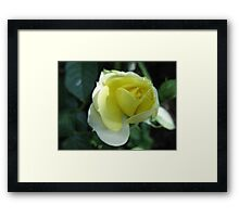 In the Lemon Softness of Petals Framed Print