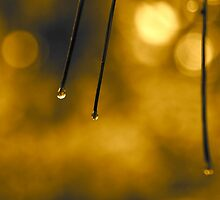 Just a Drop or Two by Valerie Rosen