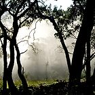 Misty Morning Gumtrees by Virginiad