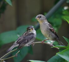 Mom and Baby Sparrow by AnnDixon