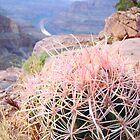 Pink Cactus = MaraMora by TAMARA MORAN