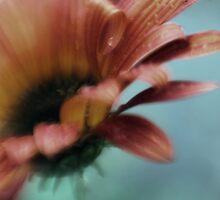 A Daisy Curl by yolanda