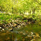 A stream in Glendalough by Martina Fagan