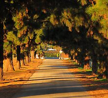 Tree Lined Road by Stephen Horton