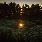 grassy pond by SarahLynn-Photo