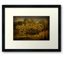 Tree And Fence Framed Print
