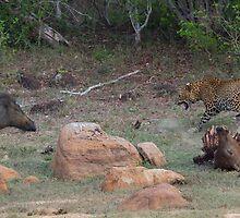 Leopard and Wild Boar Confrontation by Neil Bygrave (NATURELENS)