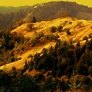 Coastal Mountains, Home of the Redwoods, Northern California by Ascender Photography