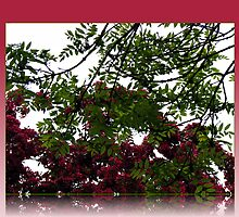 Red Blossoms and Green Leaves - Trees in May by BlueMoonRose