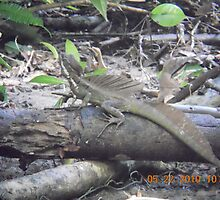 Jesus Lizard - Costa Rica by plowboy007