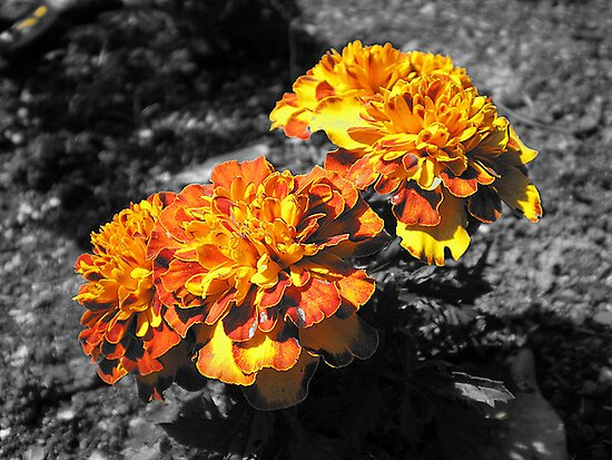 Look at the Orange 'Mamalaid!' by suzannenz