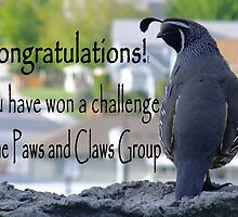 Challenge winner entry for Paws and Claws group by Robin Nellist