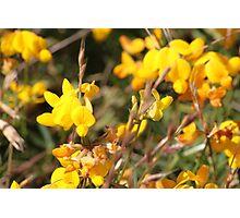 Yellow Springtime Wildflowers Photographic Print