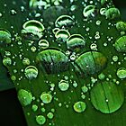 Green Rain Drops by Tori Snow