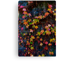 Dreaming of Leaves in Every Hue Canvas Print