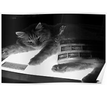 The Lightbox, the Cat and the Negatives II Poster