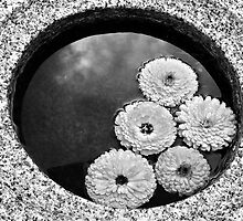 Reflections of Calmness & Beauty by Jen Waltmon