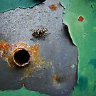 Spider & Hole by James  Birkbeck