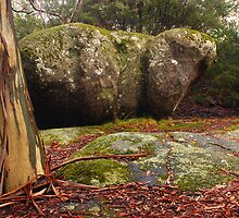 Hippo rock at Mt Buffalo National Park, Victoria by Speedy