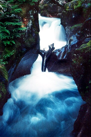 Avalanche Creek -- Glacier National Park by pj johnson