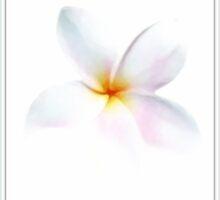 ~ Plumeria ~ by Brenda Boisvert