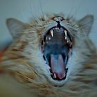Puddy Cat Yawning by Ryan Conners