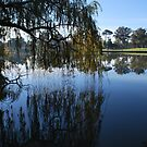 Autumn Willow Reflections by Lozzar Landscape