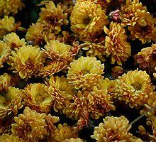 Gold Marigolds by Schutte14